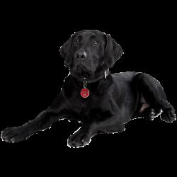 Médailles pour chiens à personnaliser