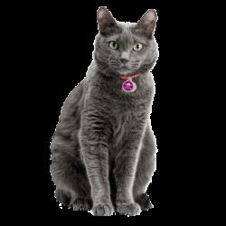 Médailles pour chats à personnaliser