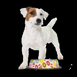 Gamelles pour les chiens à personnaliser