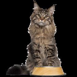 Gamelles pour les chats à personnaliser